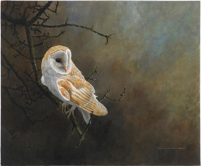 Wildlife Greetings Cards by Artist Richard Whittlestone (Mid-Winter Barn Owl)