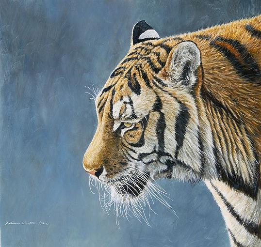 Tiger Study CP112