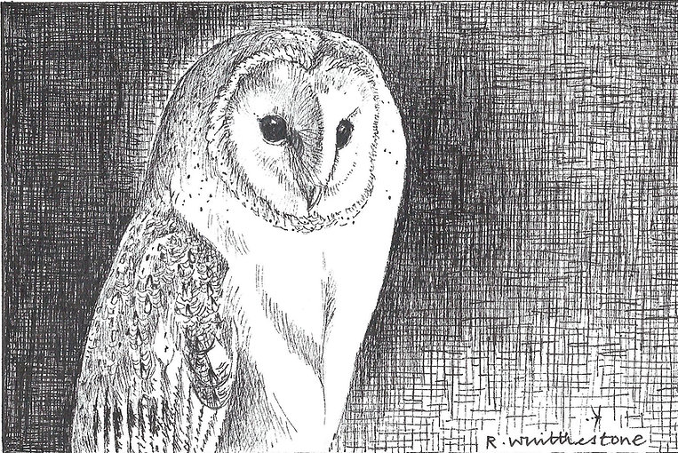 Barn Owl Study RW037PI