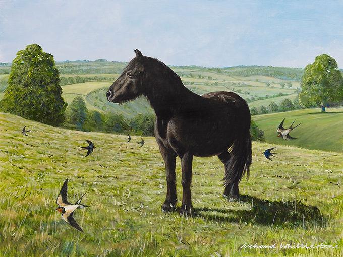 Fell Pony with Swallows RW2785P