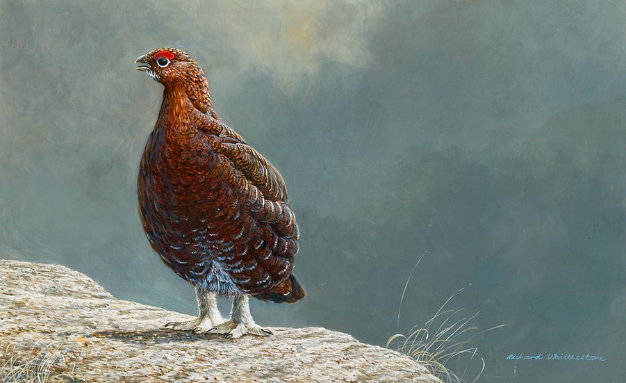 Storm Warning Bird Print by Wildlife Artist Richard Whittlestone