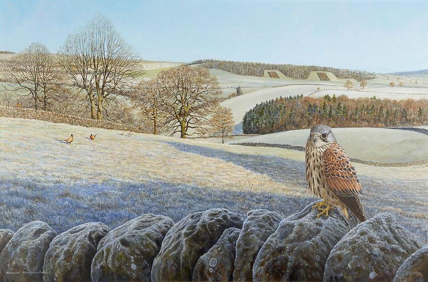 Regal Outlook Bird Print by Wildlife Artist Richard Whittlestone