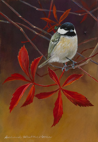 Coal Tit Virginia Creeper Bird Painting by Wildlife Artist Richard Whittlestone