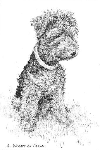Welsh Terrier RW026PI