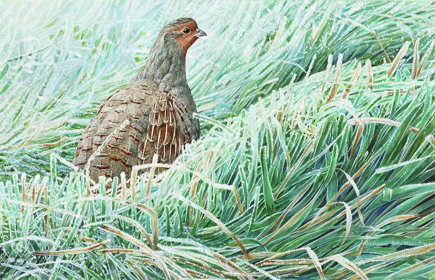 First Frost Bird Painting by Wildlife Artist Richard Whittlestone