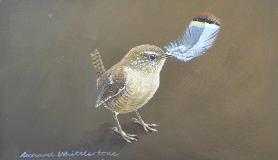 Wren and a Red-legged Partridge Feather