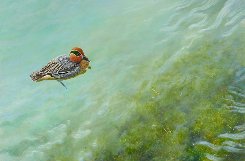 Wildlife Greetings Cards by Artist Richard Whittlestone (Teal on Bright Water)