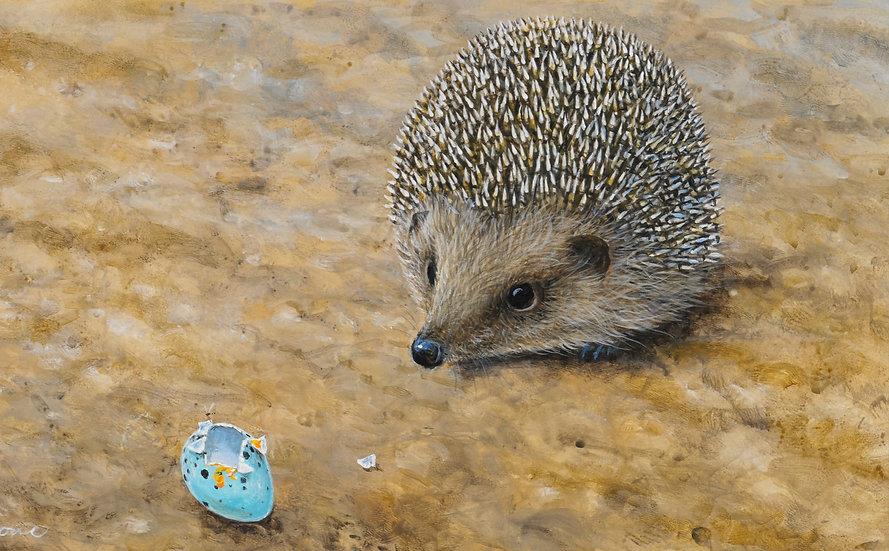 Hedgehog and Broken Thrush Egg
