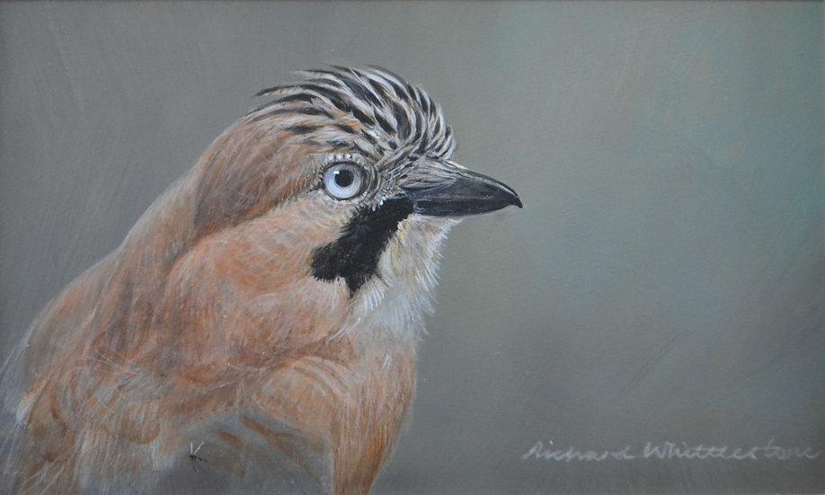 Portrait Jay Bird Painting by Wildlife Artist Richard Whittlestone