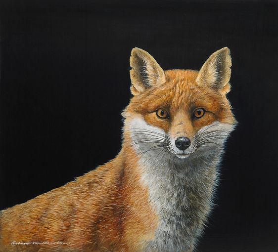 Portrait of a Dog Fox