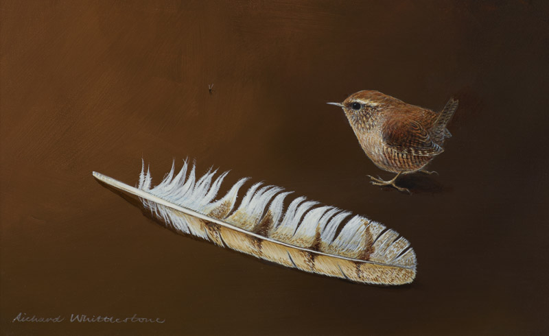 Wren with Tail Feather