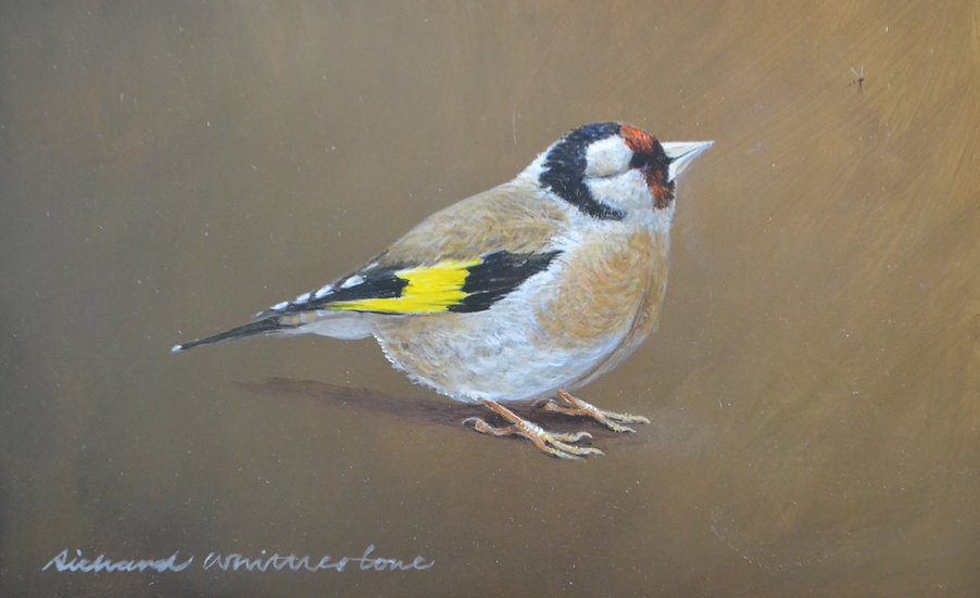 Goldfinch Painting by Wildlife Artist Richard Whittlestone
