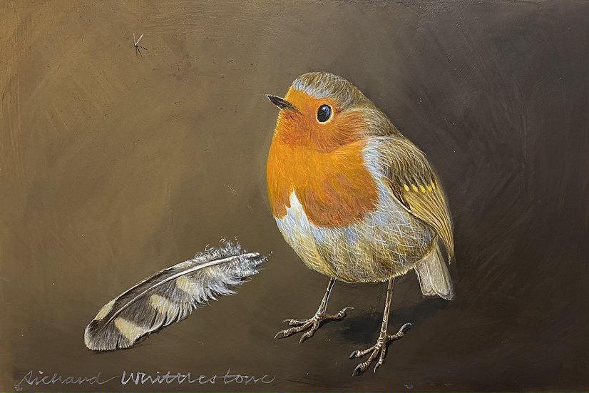 Robin and a Little Owl Feather