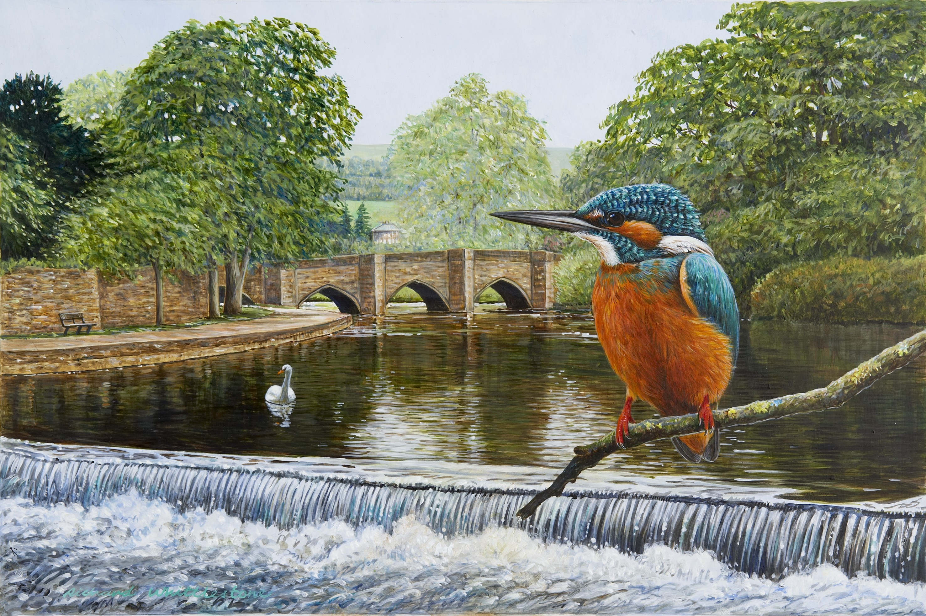Kingfisher at Bakewell