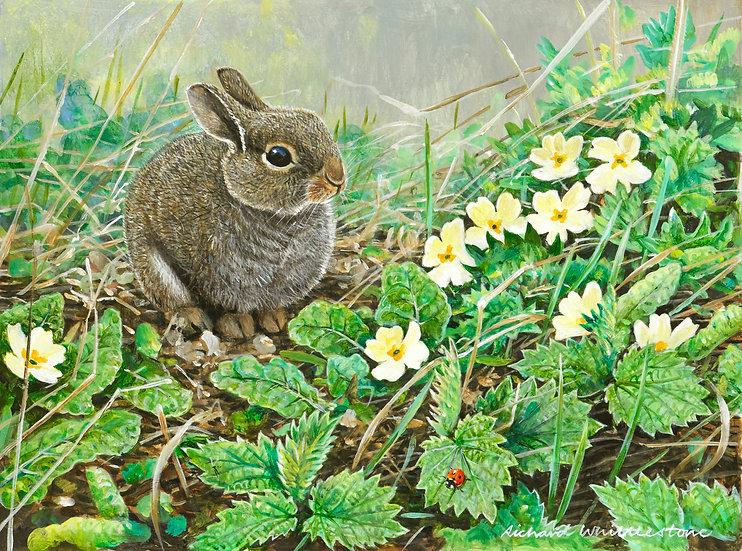 Baby Rabbit and Primroses