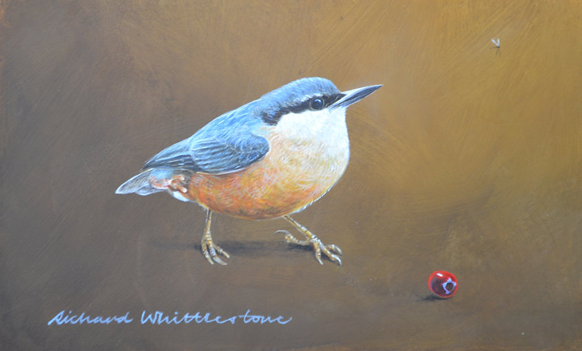 Nuthatch with a Hawthorn Berry