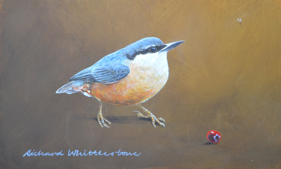 Nuthatch Bird Painting by Wildlife Artist Richard Whittlestone