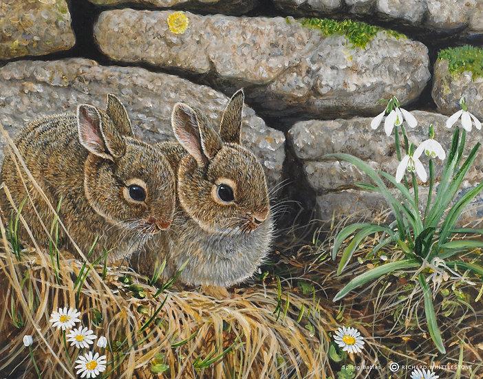 Spring Babies Print by Wildlife Artist Richard Whittlestone