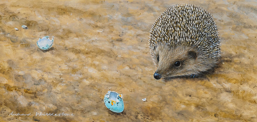 Wildlife Greetings Cards by Artist Richard Whittlestone (Hedgehog and Broken Thrush Eggs))