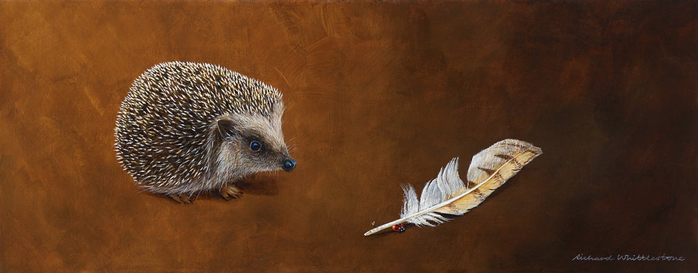 Hedgehog and Barn Owl Feather