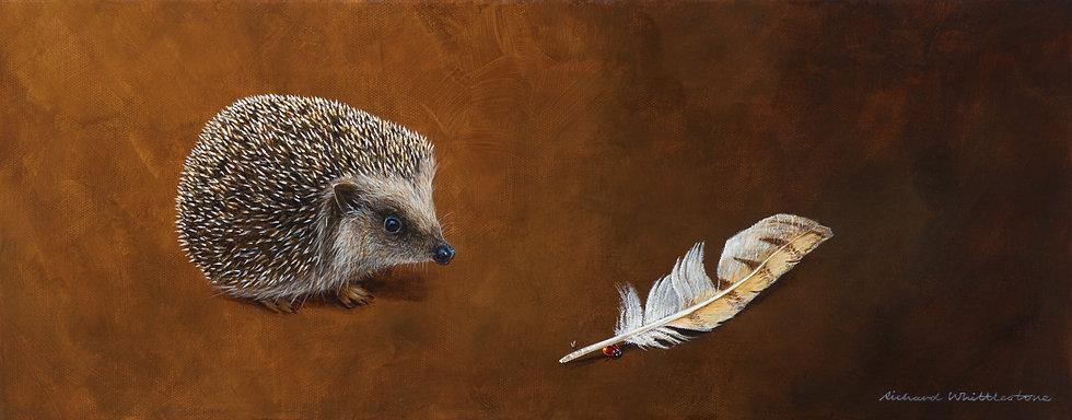 Hedgehog and Barn Owl Feather