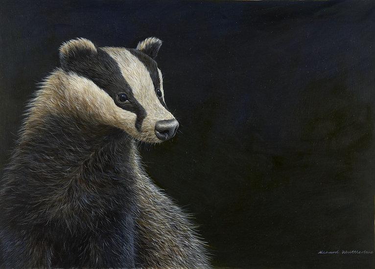 Mr Badger Print by Wildlife Artist Richard Whittlestone
