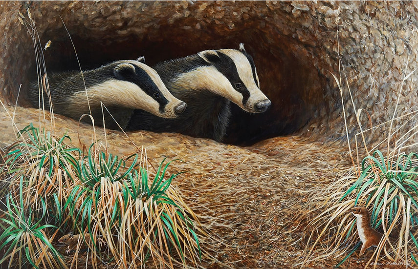 Unexpected Visitors Badgers Print by Wildlife Artist Richard Whittlestone