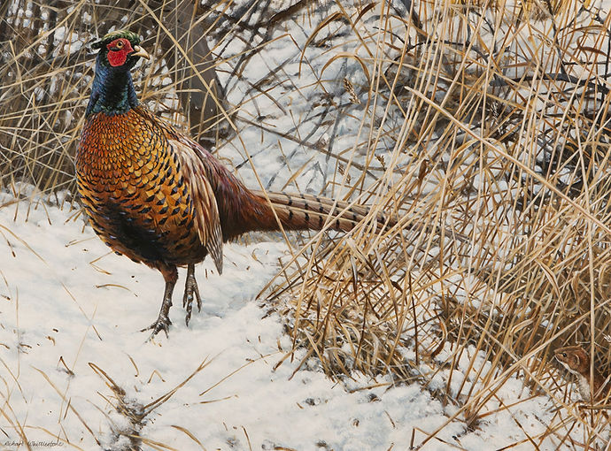 Pheasant in the Snow RW707P