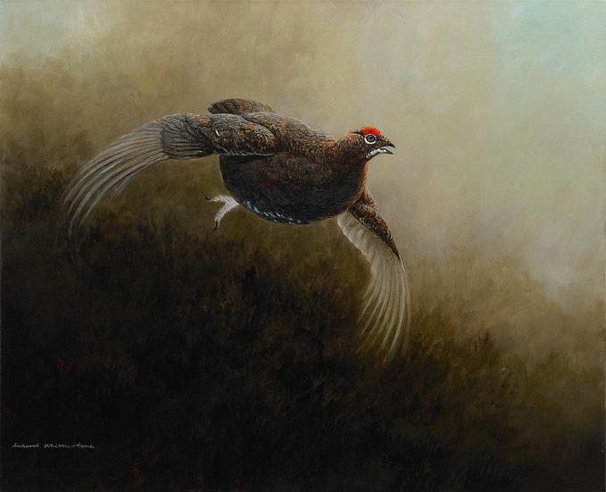 Red Grouse Bird Print by Wildlife Artist Richard Whittlestone