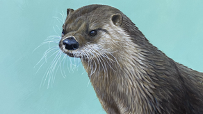 In Otter News!!