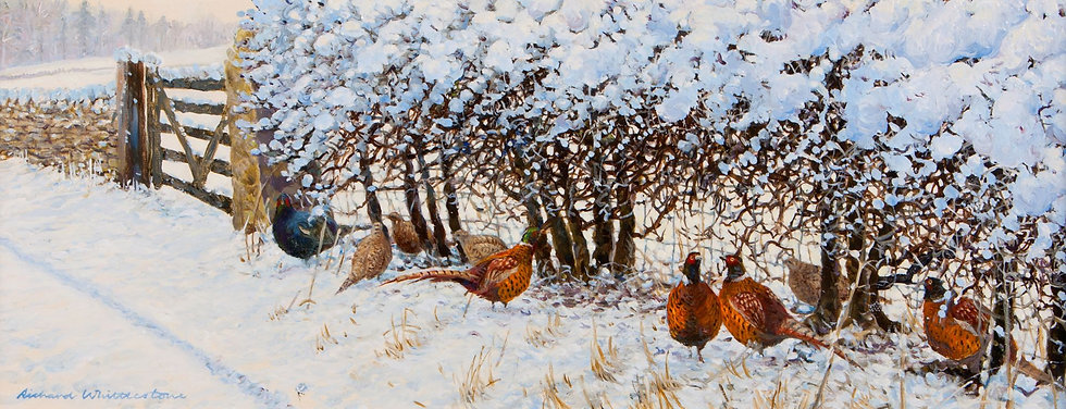 Pheasants Sheltering Bird Print by Wildlife Artist Richard Whittlestone