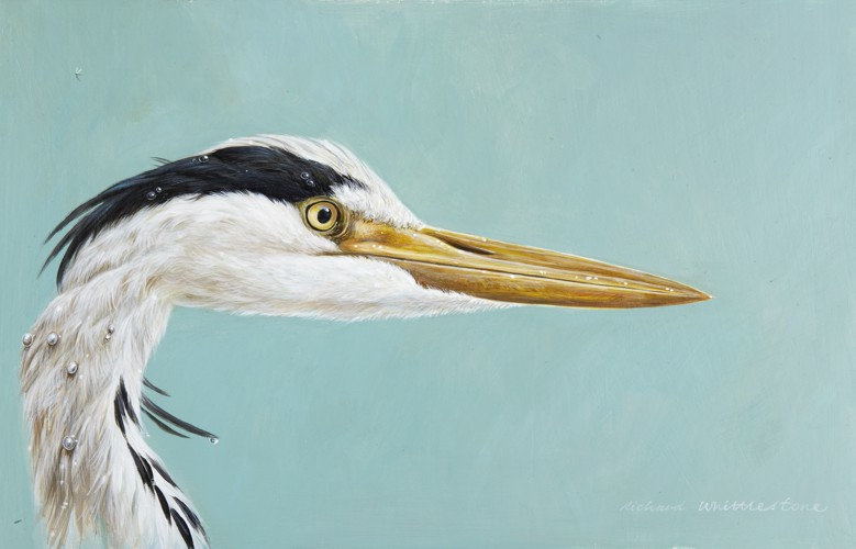 Heron Portrait Bird Print by Wildlife Artist Richard Whittlestone