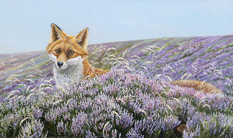 Wildlife Greetings Cards by Artist Richard Whittlestone (On the Foxpath)