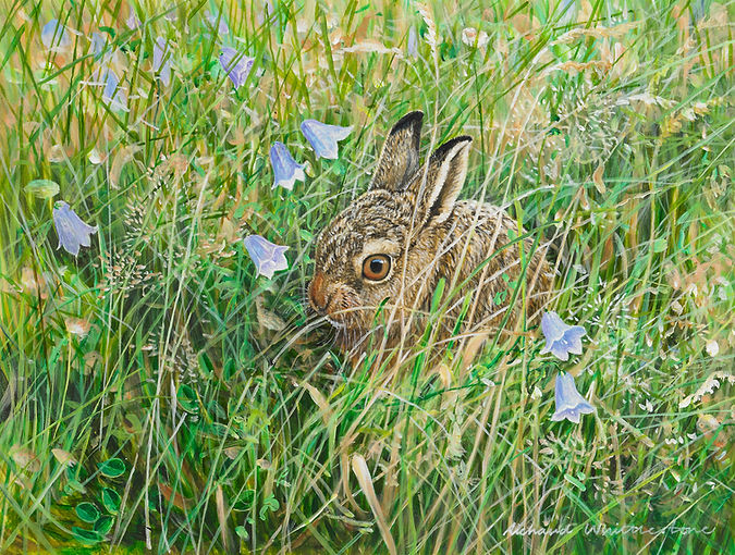 Leveret and Harebells