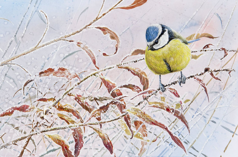 Wildlife Greetings Cards by Artist Richard Whittlestone (Blue Tit and Winter Willow Herb)