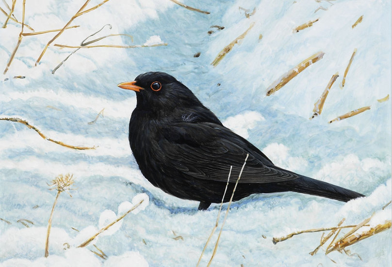 Wildlife Greetings Cards by Artist Richard Whittlestone (Blackbird in the Snow)