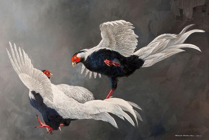 Silver Spurs Bird Painting by Wildlife Artist Richard Whittlestone
