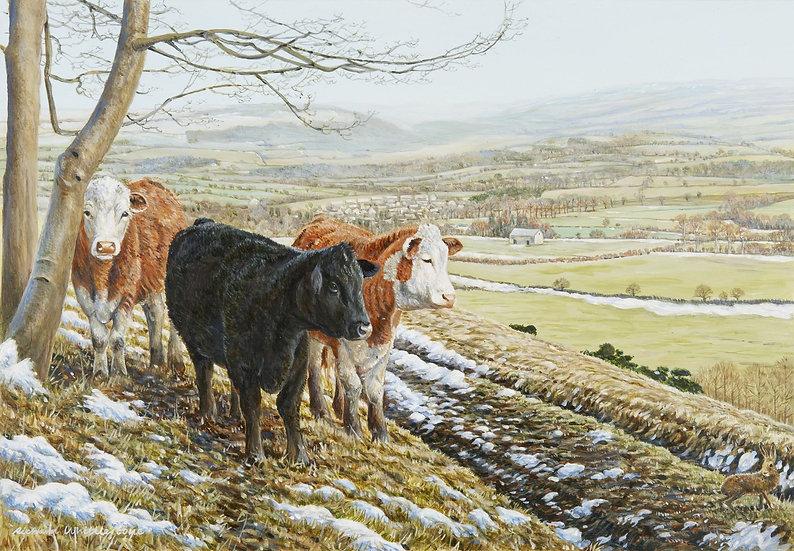 Winters Afternoon Print by Wildlife Artist Richard Whittlestone