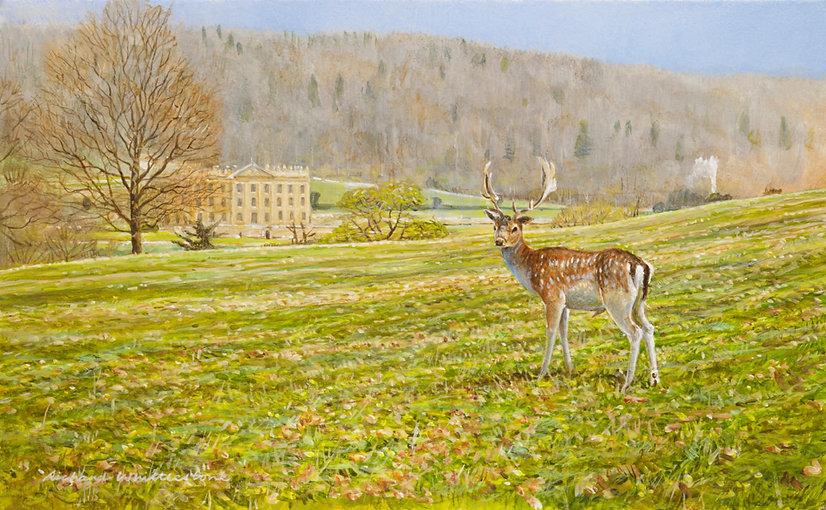Chatsworth Fallow Deer