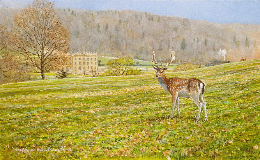 Chatsworth Fallow Deer Painting by Wildlife Artist Richard Whittlestone