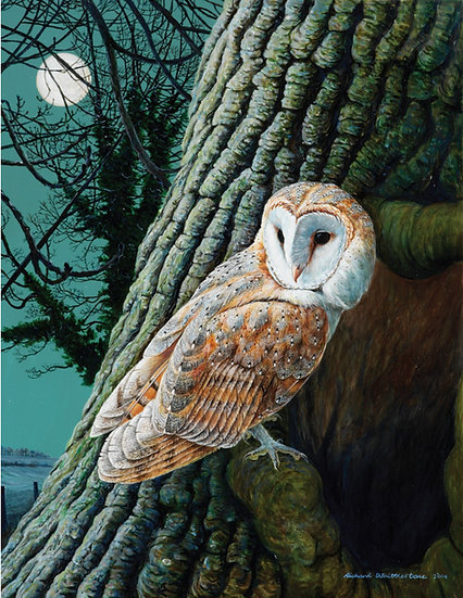Moonfleet Barn Owl Print by Wildlife Artist Richard Whittlestone