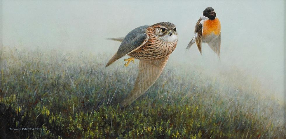 Closing In Merlin Stonechat Bird Painting by Wildlife Artist Richard Whittlestone