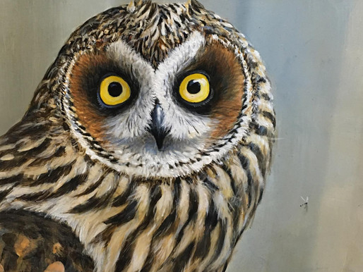 Let me tell you about my day.... it was a hoot!