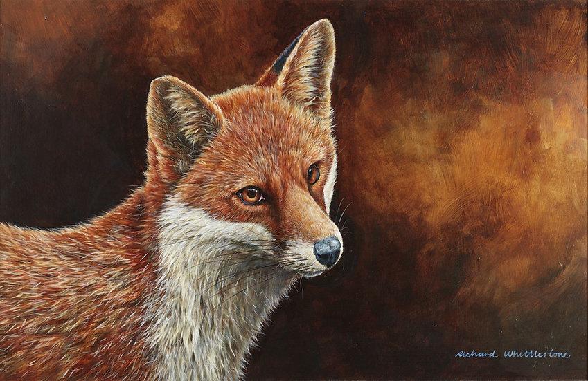 Fox Portrait Print by Wildlife Artist Richard Whittlestone