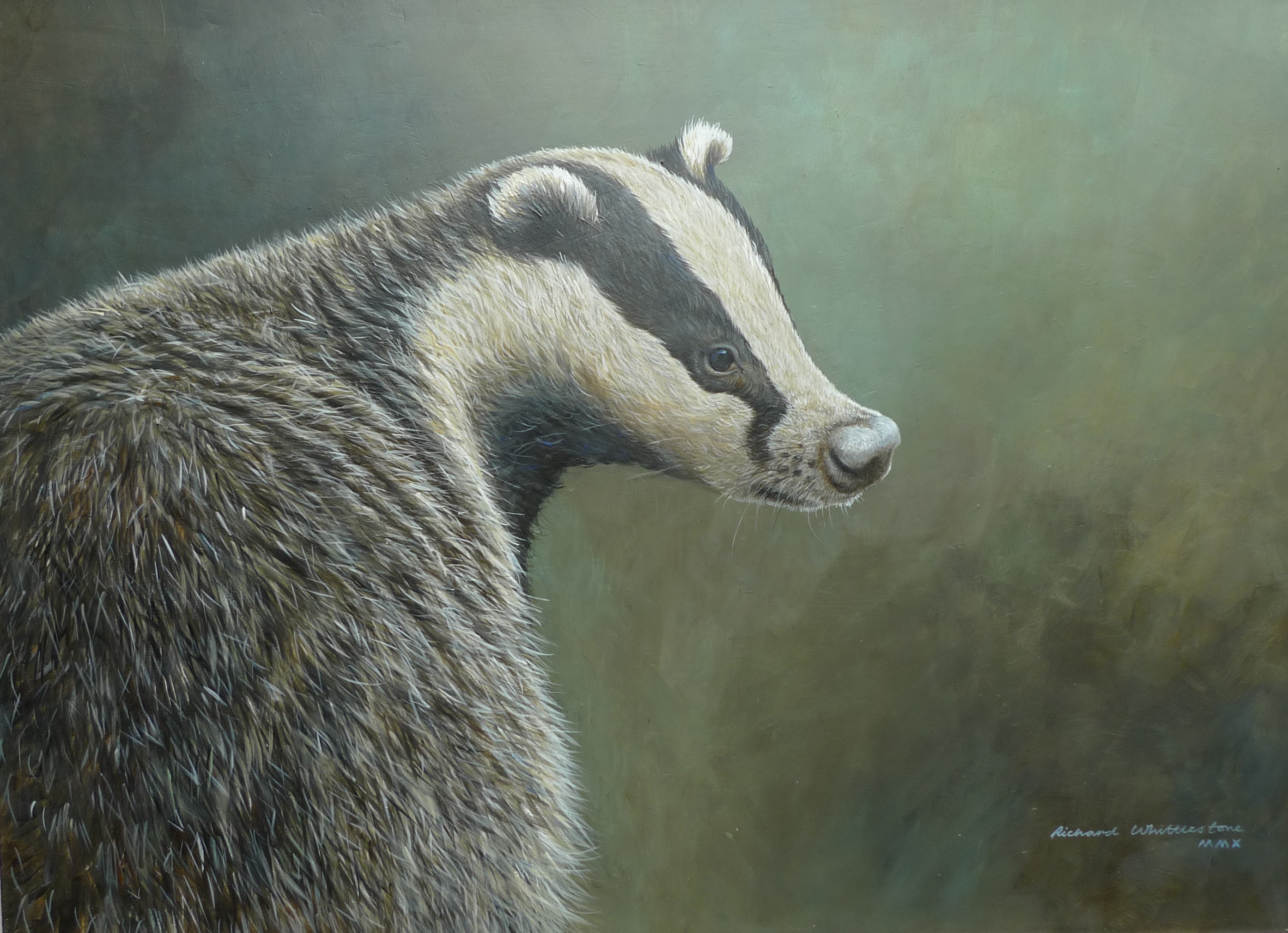 Badger Portrait