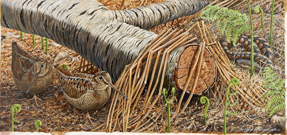 Down in the Woods Bird Print by Wildlife Artist Richard Whittlestone
