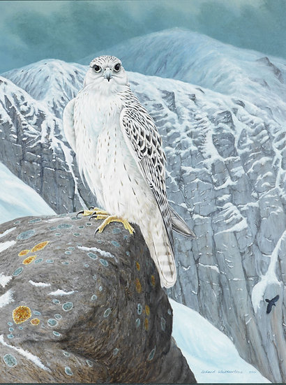 Arctic Beauty Bird Painting by Wildlife Artist Richard Whittlestone