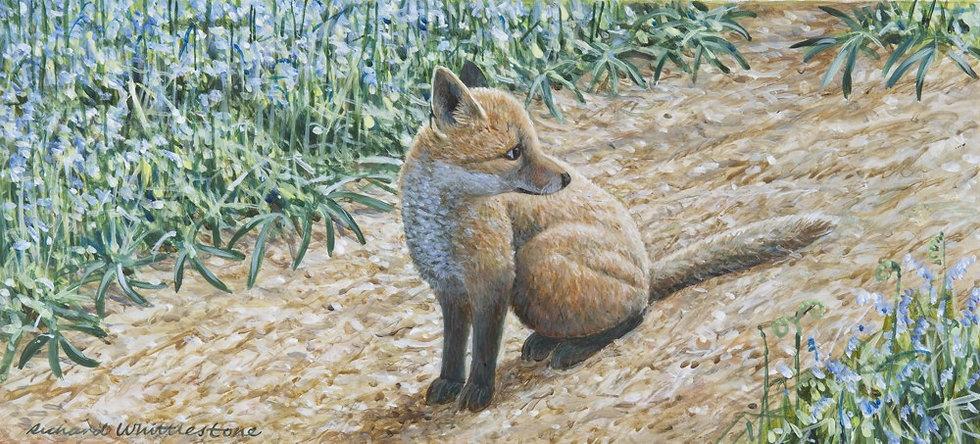 Fox Cub Bluebells Painting by Wildlife Artist Richard Whittlestone