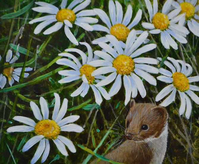 Weasel Ox-Eye Daisies Print by Wildlife Artist Richard Whittlestone