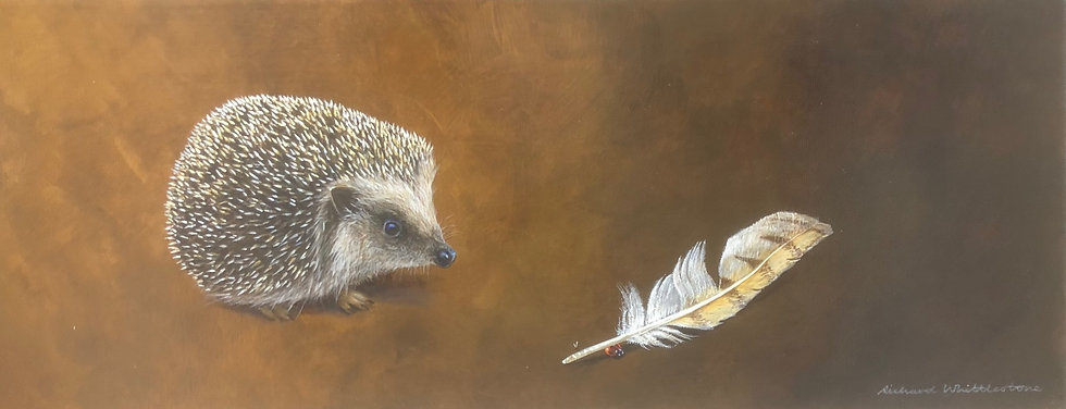 Young Hedgehog and a Barn Owl Feather